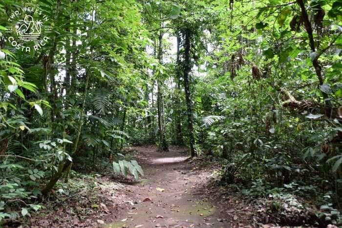 Forest Bogarin Trail