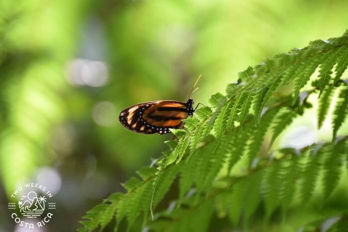 Butterfly Bogarin Trail