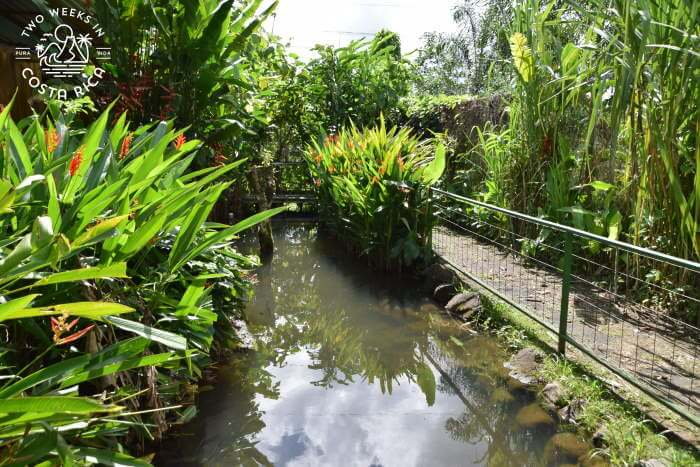 Pond Bogarin Trail