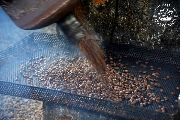 Coffee roasting demonstration North Fields Cafe