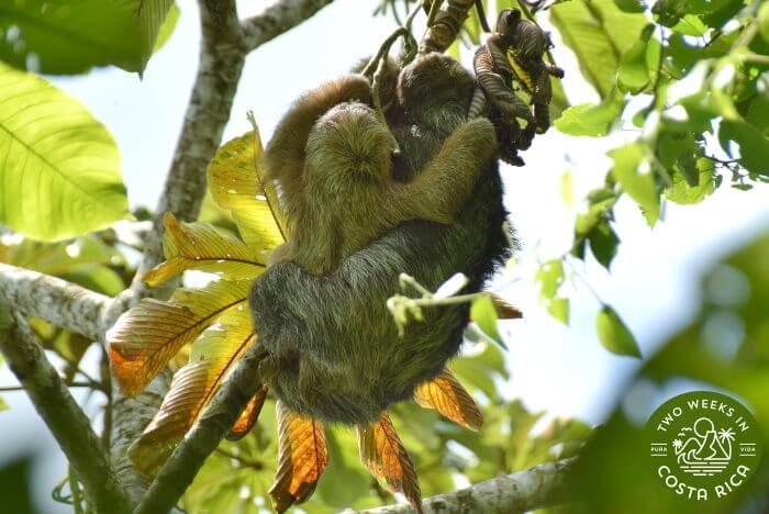 Sloths Bogarin Trail