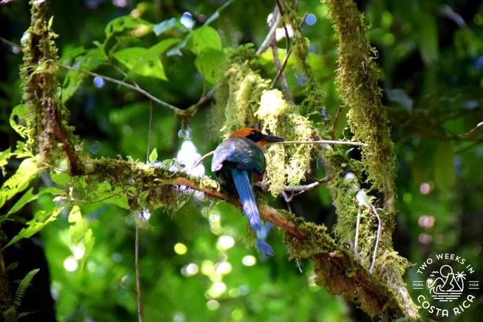Tropical Bird Mistico Hanging Bridges