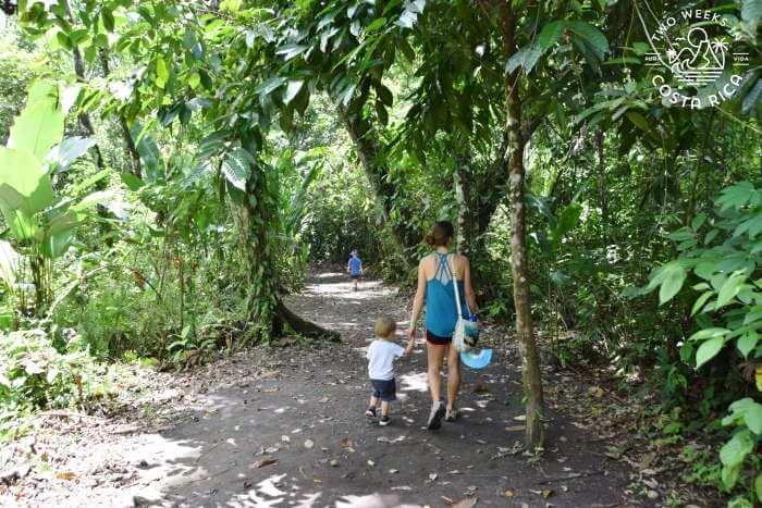 Flat Bogarin Trail