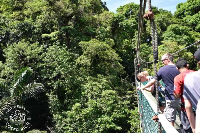 Hanging Bridges in Costa Rica